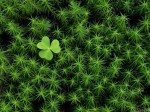 thumb3_green_clover_2